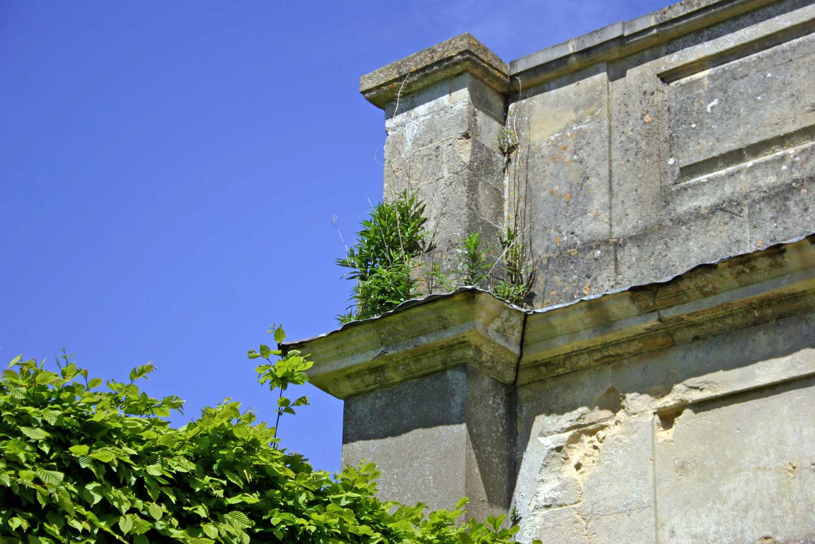 Weeds Growing Above the Outer Porch